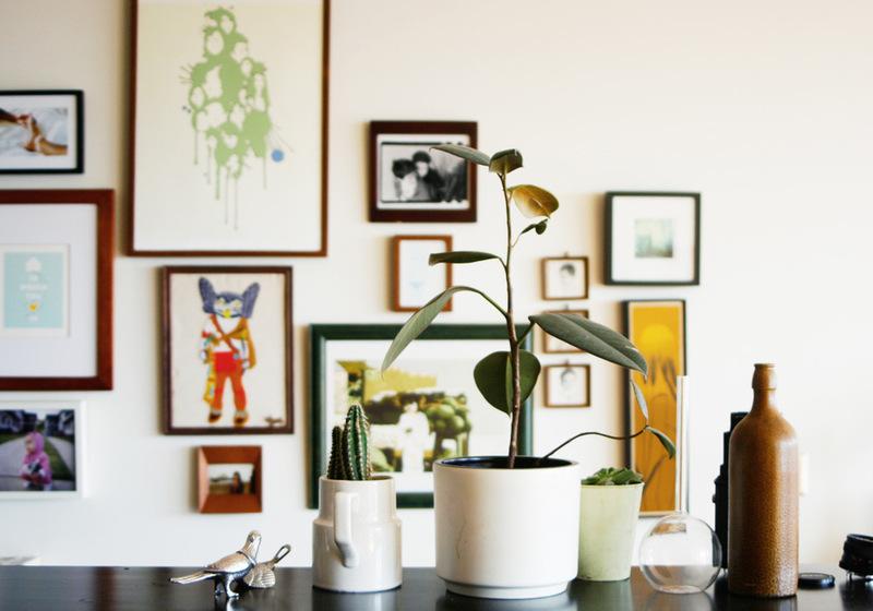 Три комнатных растения в белых горшках