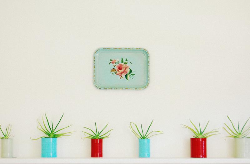 цветы в интерьере - фото небольших кустиков алоэ