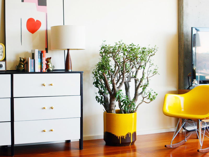 Фото комнатного дерева в контрастном горшке