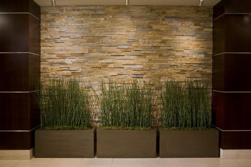 Комнатные растения вдоль стены