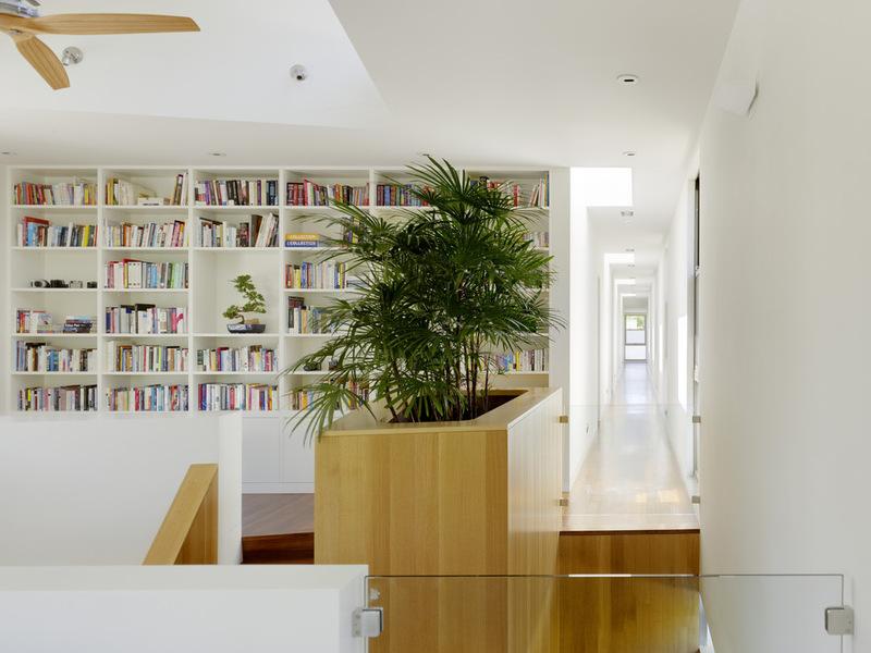 Большое комнатное растение в интерьере библиотеки