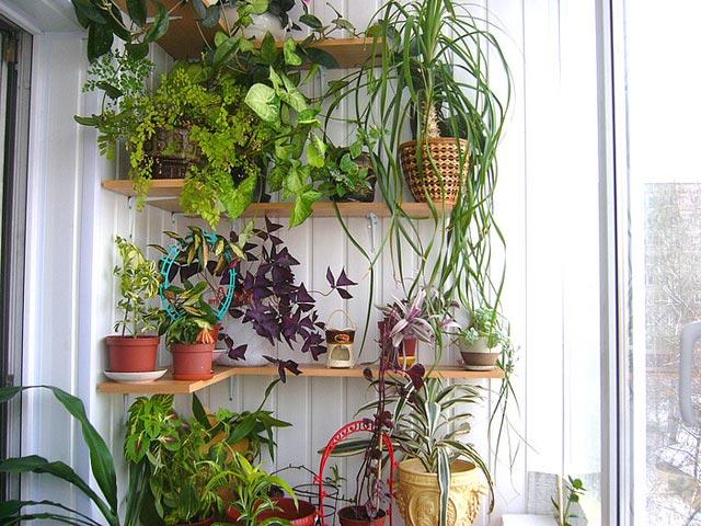 Идеи для цветов в квартире своими руками 25