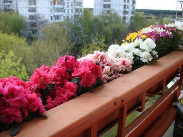 цветы на балконе в подвесных горшках