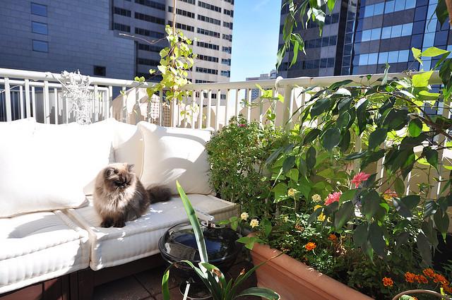 интерьер уютного балкона с грилем и цветами