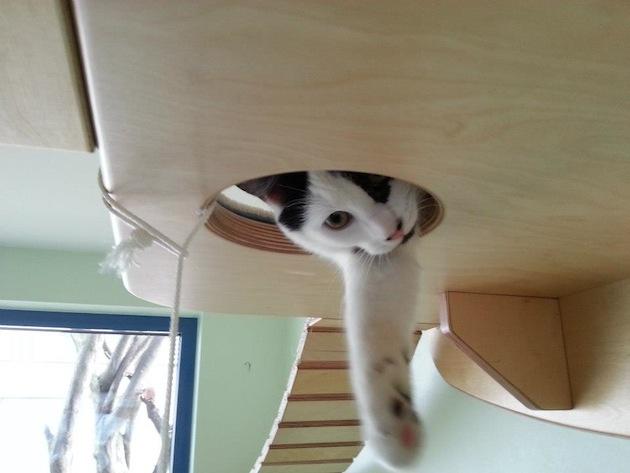 Интерьер для кошек от GoldPaw (2)