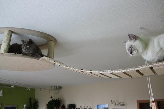 Интерьер для кошек от GoldPaw (1)